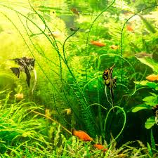 types of aquariums features and benefits infinity aquarium design