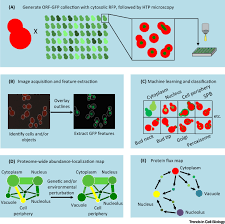 high content screening for quantitative cell biology trends in