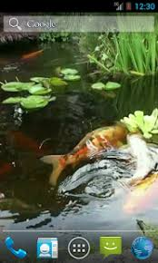 koi free live wallpaper apk japanese koi fish wallpaper android apps on play