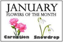 Birth Flower Of January - flowers of the month holidaysmart