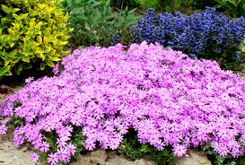 10 Best Perennials And Flowers by 15 Colorful Perennials For Shade Northern Nester