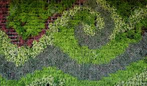 How To Make A Moss Wall by Variety Of Plants In Vertical Garden Texture Wall In Wave Shape