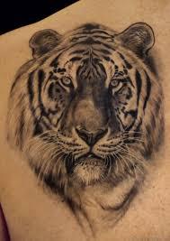 black and white tiger on shoulder