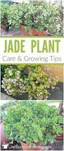 2288 best container gardening images on pinterest plants