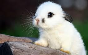 help me name my bunny rabbit weddingbee