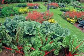 Design Your Backyard Online by Landscaping Your Front Yard Pictures Landscaping Your Yard For