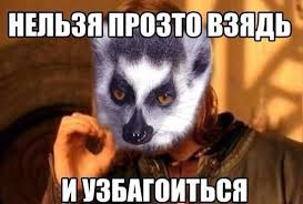 Lemur Meme - картинки по запросу lemur meme funny pinterest