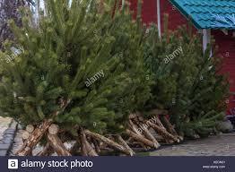 selling christmas trees stock photos u0026 selling christmas trees