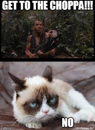 Arnold Schwarzenegger Memes - cat memes arnold schwarzenegger google search meme pinterest
