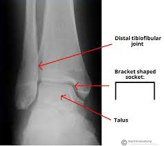 Anterior Distal Tibiofibular Ligament The Ankle Joint Articulations Movements Teachmeanatomy
