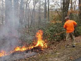 Kentucky forest images Forest fires still blazing in eastern kentucky despite light rain