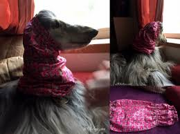 afghan hound fabric afghan hound blog threads al khabara