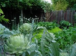 10 ideas for a front yard edible garden your neighbors will love