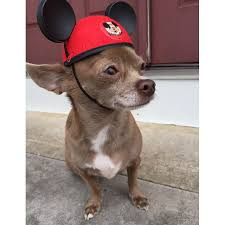 Disney Halloween Costumes Dogs Dogs Wearing Mickey Mouse Costume Popsugar Middle East Pets