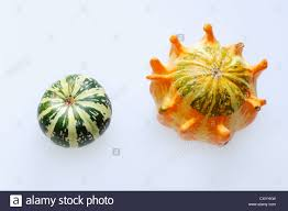 ornamental squash or pumpkins cucurbita pepo stock photo royalty