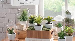 plante cuisine decoration les bonnes idées pour utiliser les plantes dans la décoration
