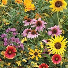 bulk seed packets flower seed packets bulk flower seed bentley seeds