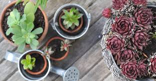 Patio Plants For Sun Patio Decorating Ideas On The Cheap