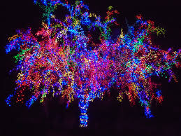 Colored Christmas Lights by Holiday Light Tours Hampton Roads Holiday Light Bus Rental