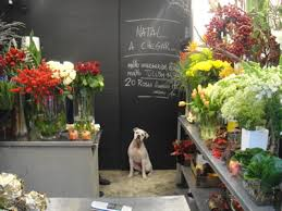 flower stores image result for http www thelisbonconnection wp