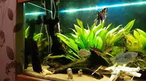 wars aquarium dagobah