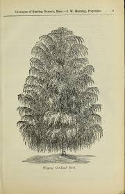 file catalogue of hardy ornamental trees shrubs and vines hardy