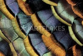 south american oscellated turkey feather pattern