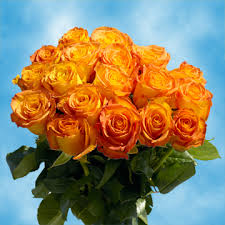 yellow roses with tips gorgeous yellow roses with orange tips global