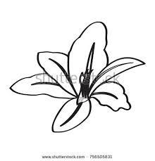 vanilla pods sticks hand drawing sketches stock vector 543900481