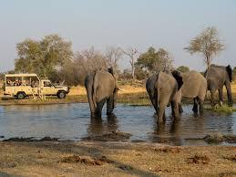 african safari animals southern african safari holidays ke adventure travel