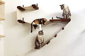 cat wall furniture amazon com catastrophicreations deluxe cat playplace cat