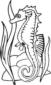 coloriage hippocampes hippocampes 2 à colorier allofamille