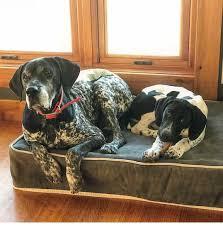Dog Beds With Cover Kuranda Dog Beds Kuranda Twitter