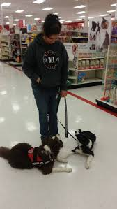 ten things people believe about service dogs that simply are not