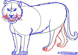 how to draw a tiger by rainforest animals animals free