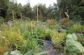 native plant nursery michigan hidden savanna nursery van kal permaculture