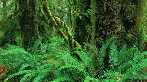 images of fern tree wallpaper kelly sc