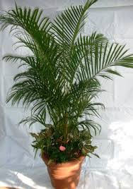 indoor plants singapore skyland gardening office plants rental