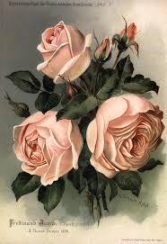 imagenes de feliz sabado vintage el rincón vintage láminas de flores vintage