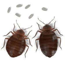 How To Check For Bed Bugs At Home How To Find Bed Bugs And Get Rid Of Them Take Care Termite