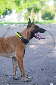 belgian shepherd health problems nylon collar with handle and quick release buckle for belgian