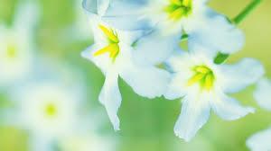 வால்பேப்பர்கள் ( flowers wallpapers ) 01 - Page 2 Images?q=tbn:ANd9GcQrkFVpm3wWo5AEAAOXImsBvdjx5pHSOFGe8PB87s2wusoCW-TmXQ
