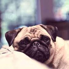 Causes Of Sudden Blindness In Dogs Causes Of Dog Anxiety Petcarerx