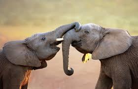 bespoke safari experiences at elephant u0027s eye hwange hideaways