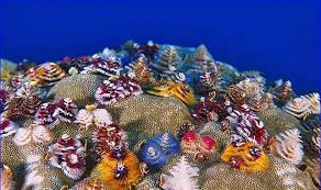 tree coral care rainforest islands ferry