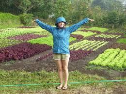 design backyard vegetable garden ideas landscaping u0026 backyards