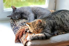 Katze Schlafzimmer Ja Bett Nein 5 Tipps Neue Katze Zieht Ein Katzen Erfolgreich Aneinander Gewöhnen