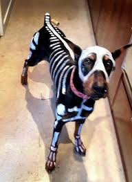 Funny Dog Costumes Halloween 160 Halloween Dog Costumes Images Animals