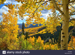 fall colors forest road 730 ohio pass crested butte