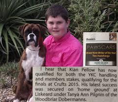 boxer dog crufts 2015 rosanyos boxers